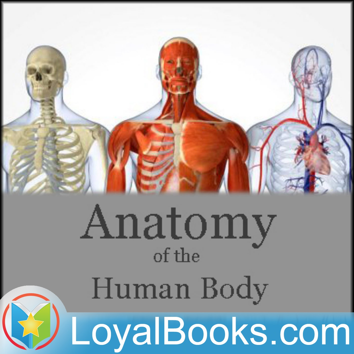 The anatomy of a human body